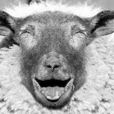 The_Odd_ Sheep