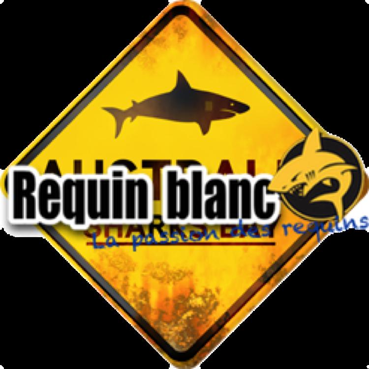 Requin-Blanc