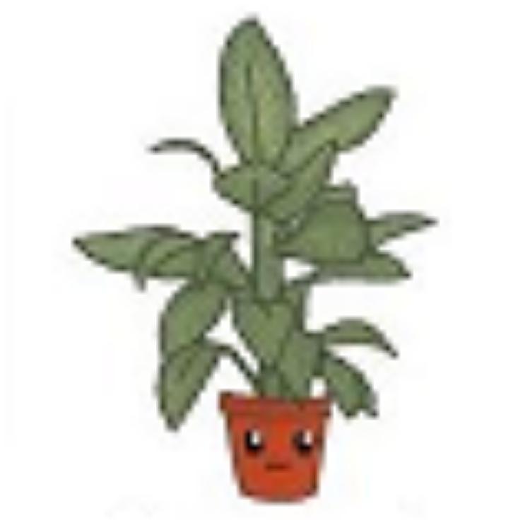 plantouille