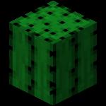 CactusLibidineux